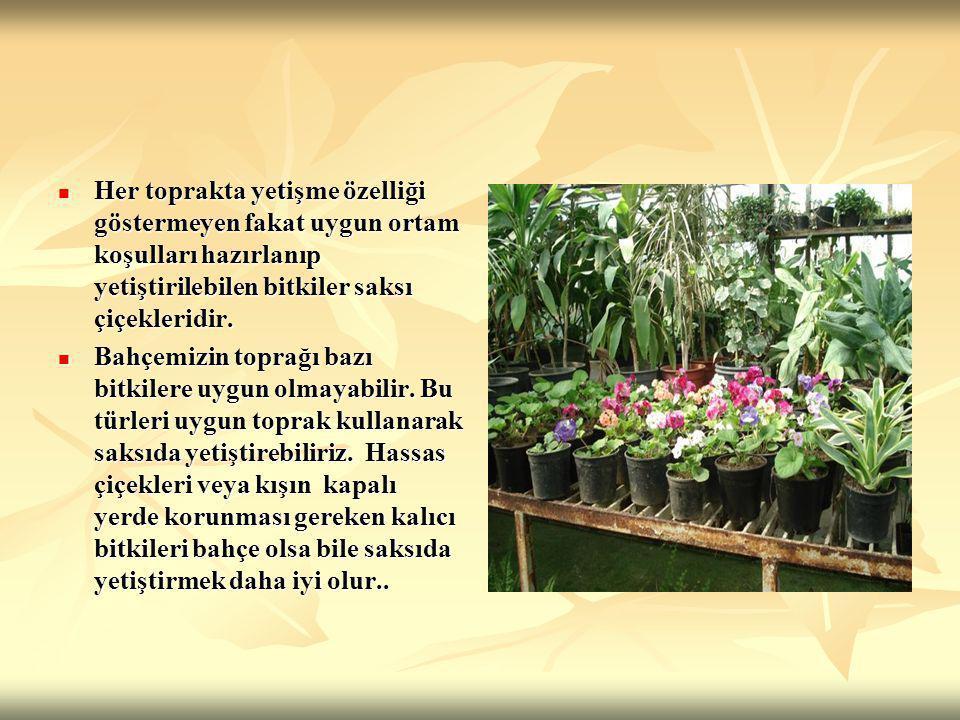 Saksı bitkileri deyince aklımıza hep klasik çiçekler gelir.