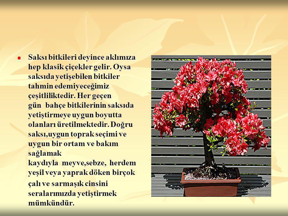 SAKSI SEÇİMİ Saksı seçilirken büyüklüğünün dikilecek bitkiye uygun olmasına dikkat edilmelidir.