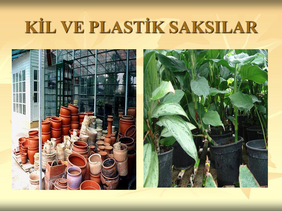 SULAMA Sardunya ve sukkulent bitkiler (yaprakları etli bitkiler) örneğin kaktüs cinslerine toprakları hafifçe kurumadan su verilmemelidir.