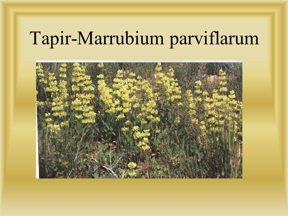 KUM BARKANLARI( 4000 ha) Yaklaşık 4000 ha. olan bu saha küçük kumul tepeciklerinden oluşmaktadır. Daha önce çok iyi bir mera ve otlak arazisi olan böl
