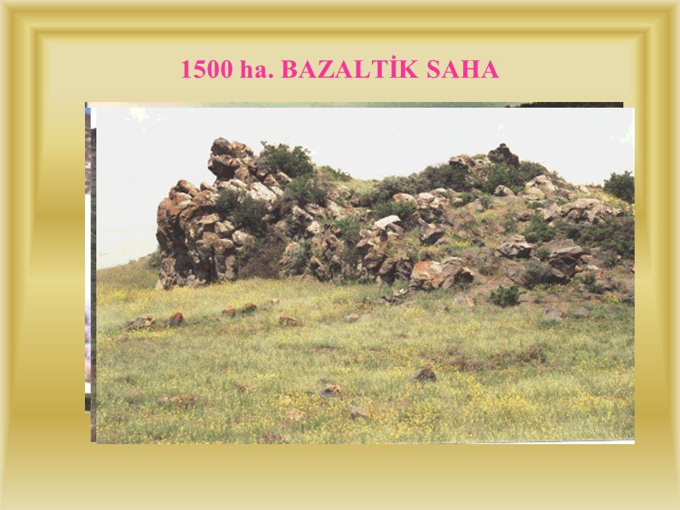 BAZALTIK SAHA (1500 ha.) Bazaltik kayalardan oluşan bu saha, ilçenin çok yakınından başlayıp kum tepeciklerine kadar uzanmaktadır. Karapınar da erozyo