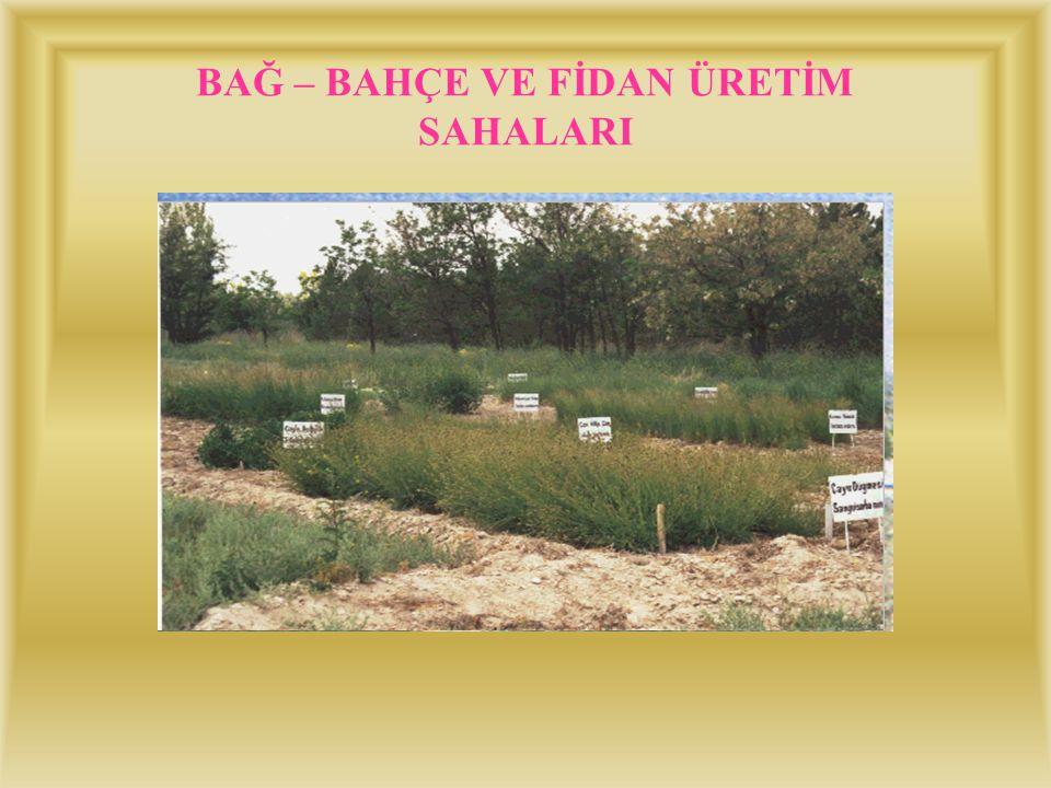 SULU TARIM SAHASI (200 ha) Bu sahada sulama amaçlı 35 derin kuyu açılmış ve bağ ve bahçe tesisleri kurulmuştur. Bu sahada ; –Erozyonu önlemeye yönelik