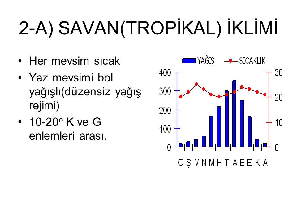 2-A) SAVAN(TROPİKAL) İKLİMİ Her mevsim sıcak Yaz mevsimi bol yağışlı(düzensiz yağış rejimi) 10-20 o K ve G enlemleri arası.