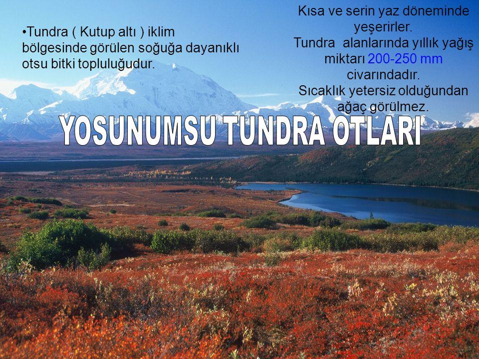 Tundra ( Kutup altı ) iklim bölgesinde görülen soğuğa dayanıklı otsu bitki topluluğudur. Kısa ve serin yaz döneminde yeşerirler. Tundra alanlarında yı