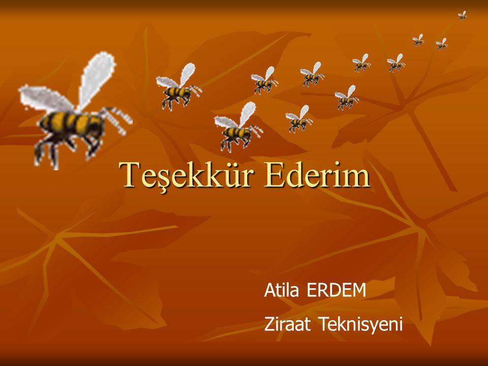 ANADOLU ARISI Genellikle esmer renkte sakin, kışlama yetenekleri iyi, çalışkan ve dayanıklı arılardır. Yağmacılık eğilimleri fazla değildir. Yön belir