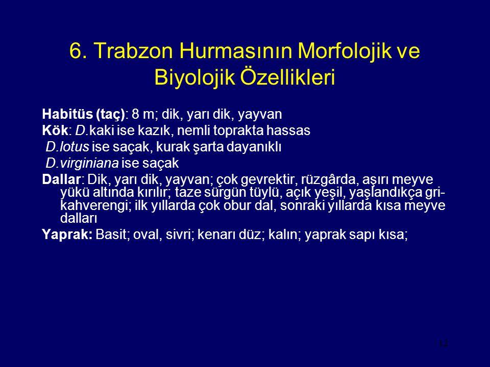 12 6. Trabzon Hurmasının Morfolojik ve Biyolojik Özellikleri Habitüs (taç): 8 m; dik, yarı dik, yayvan Kök: D.kaki ise kazık, nemli toprakta hassas D.