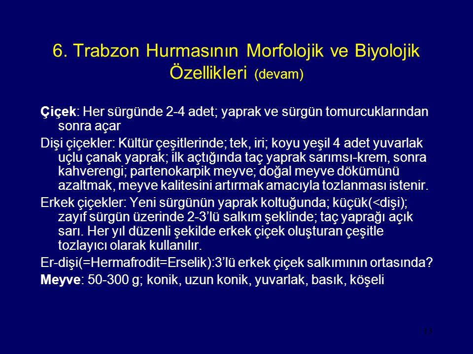 13 6. Trabzon Hurmasının Morfolojik ve Biyolojik Özellikleri (devam) Çiçek: Her sürgünde 2-4 adet; yaprak ve sürgün tomurcuklarından sonra açar Dişi ç