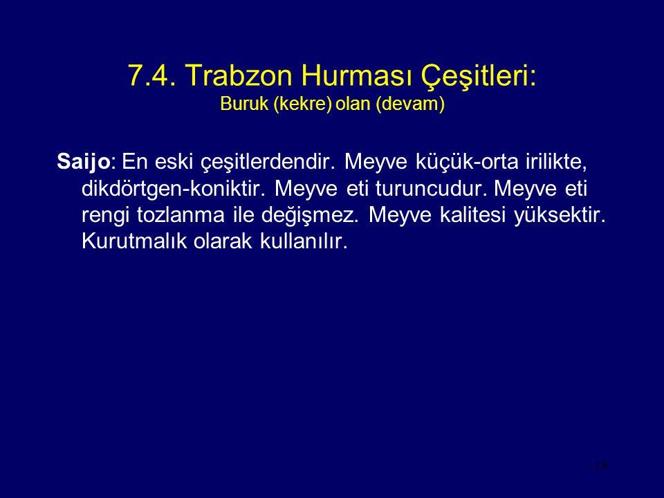 18 7.4. Trabzon Hurması Çeşitleri: Buruk (kekre) olan (devam) Saijo: En eski çeşitlerdendir. Meyve küçük-orta irilikte, dikdörtgen-koniktir. Meyve eti