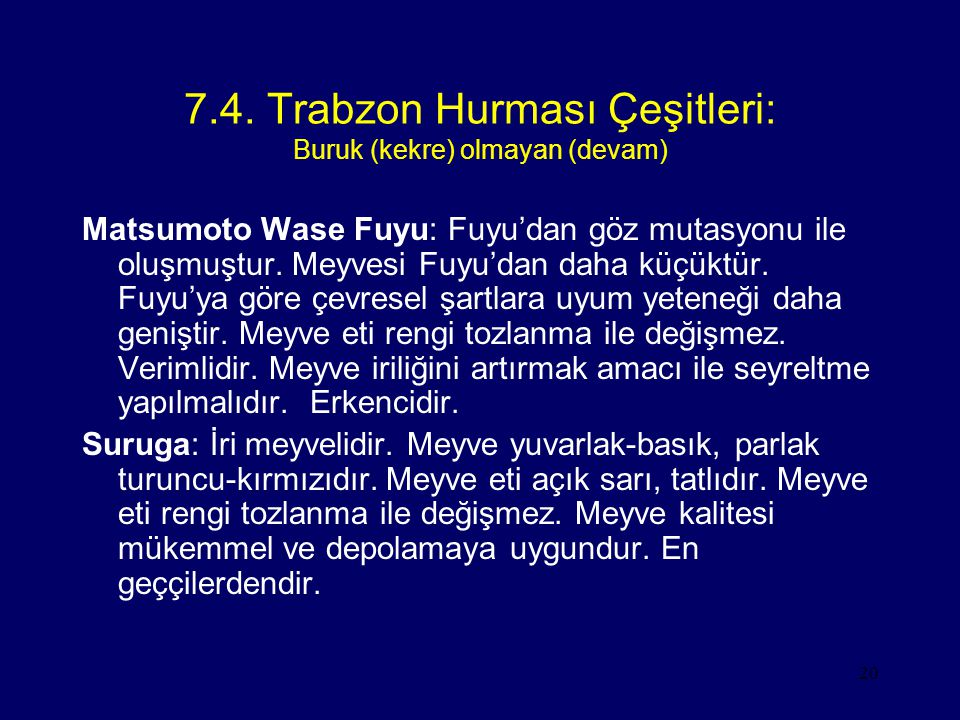 20 7.4. Trabzon Hurması Çeşitleri: Buruk (kekre) olmayan (devam) Matsumoto Wase Fuyu: Fuyu'dan göz mutasyonu ile oluşmuştur. Meyvesi Fuyu'dan daha küç