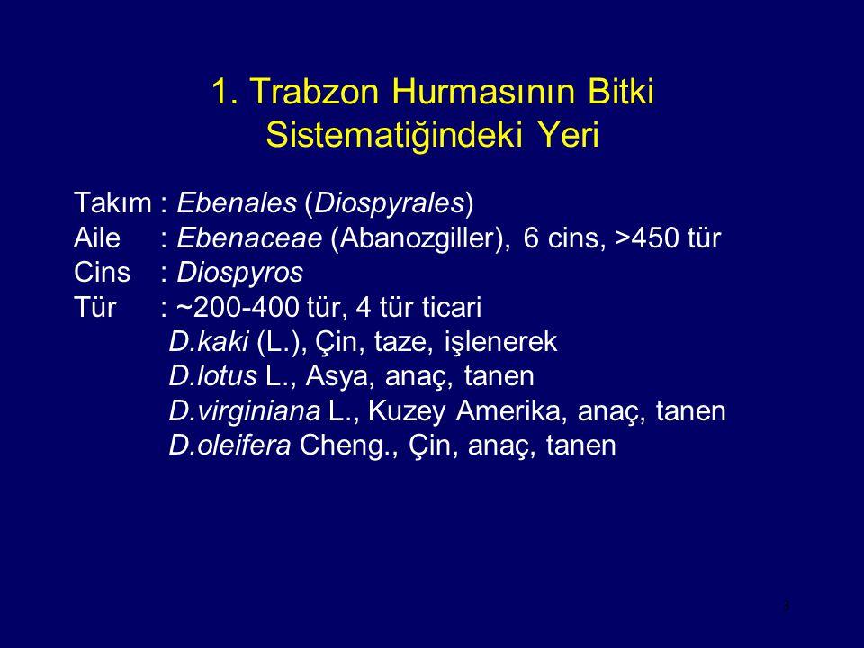 3 1. Trabzon Hurmasının Bitki Sistematiğindeki Yeri Takım: Ebenales (Diospyrales) Aile: Ebenaceae (Abanozgiller), 6 cins, >450 tür Cins: Diospyros Tür