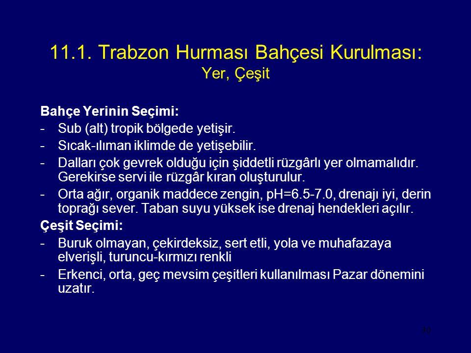 30 11.1. Trabzon Hurması Bahçesi Kurulması: Yer, Çeşit Bahçe Yerinin Seçimi: -Sub (alt) tropik bölgede yetişir. -Sıcak-ılıman iklimde de yetişebilir.