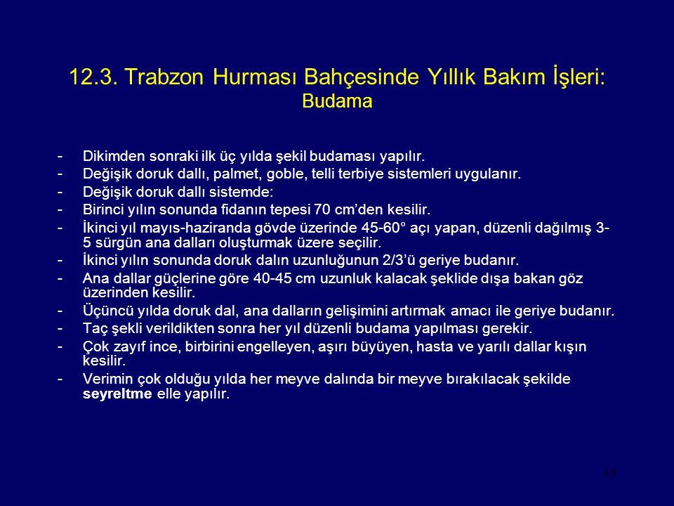 35 12.3. Trabzon Hurması Bahçesinde Yıllık Bakım İşleri: Budama -Dikimden sonraki ilk üç yılda şekil budaması yapılır. -Değişik doruk dallı, palmet, g