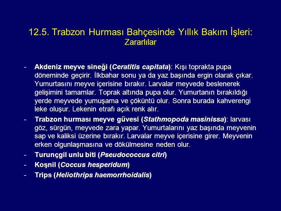 37 12.5. Trabzon Hurması Bahçesinde Yıllık Bakım İşleri: Zararlılar -Akdeniz meyve sineği (Ceratitis capitata): Kışı toprakta pupa döneminde geçirir.