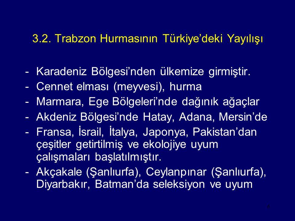 6 3.2. Trabzon Hurmasının Türkiye'deki Yayılışı -Karadeniz Bölgesi'nden ülkemize girmiştir. -Cennet elması (meyvesi), hurma -Marmara, Ege Bölgeleri'nd