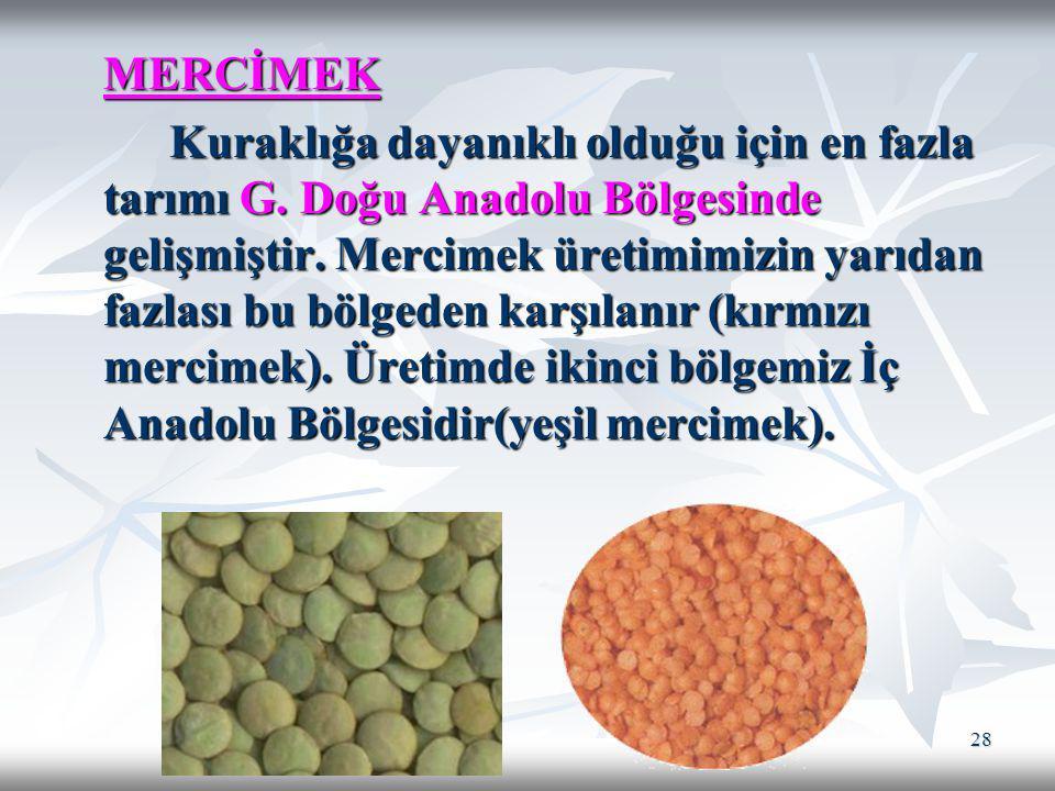 28 MERCİMEK Kuraklığa dayanıklı olduğu için en fazla tarımı G. Doğu Anadolu Bölgesinde gelişmiştir. Mercimek üretimimizin yarıdan fazlası bu bölgeden