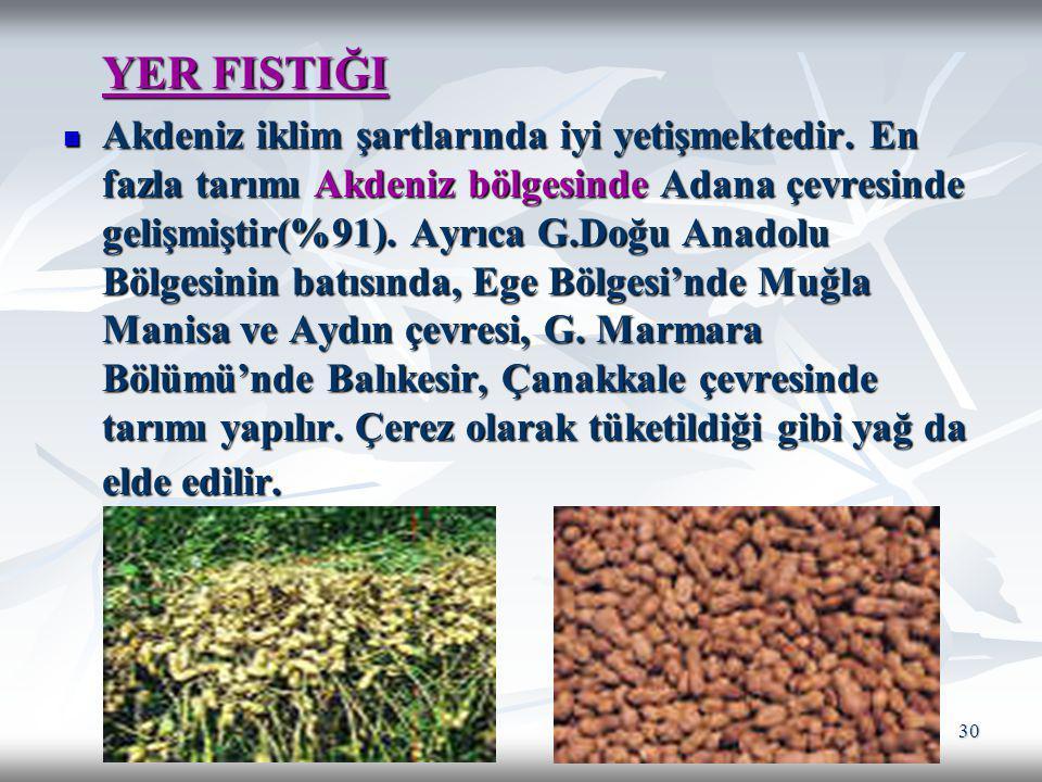 30 YER FISTIĞI YER FISTIĞI Akdeniz iklim şartlarında iyi yetişmektedir. En fazla tarımı Akdeniz bölgesinde Adana çevresinde gelişmiştir(%91). Ayrıca G