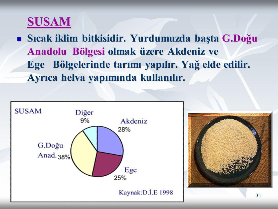 31 SUSAM Sıcak iklim bitkisidir. Yurdumuzda başta G.Doğu Anadolu Bölgesi olmak üzere Akdeniz ve Ege Bölgelerinde tarımı yapılır. Yağ elde edilir. Ayrı