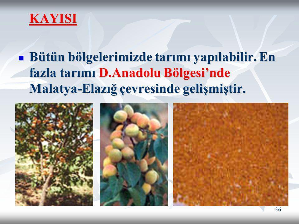 36 KAYISI Bütün bölgelerimizde tarımı yapılabilir. En fazla tarımı D.Anadolu Bölgesi'nde Malatya-Elazığ çevresinde gelişmiştir. Bütün bölgelerimizde t