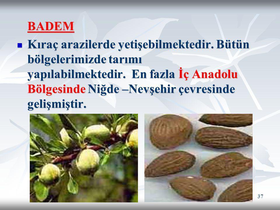 37 BADEM BADEM Kıraç arazilerde yetişebilmektedir. Bütün bölgelerimizde tarımı yapılabilmektedir. En fazla İç Anadolu Bölgesinde Niğde –Nevşehir çevre