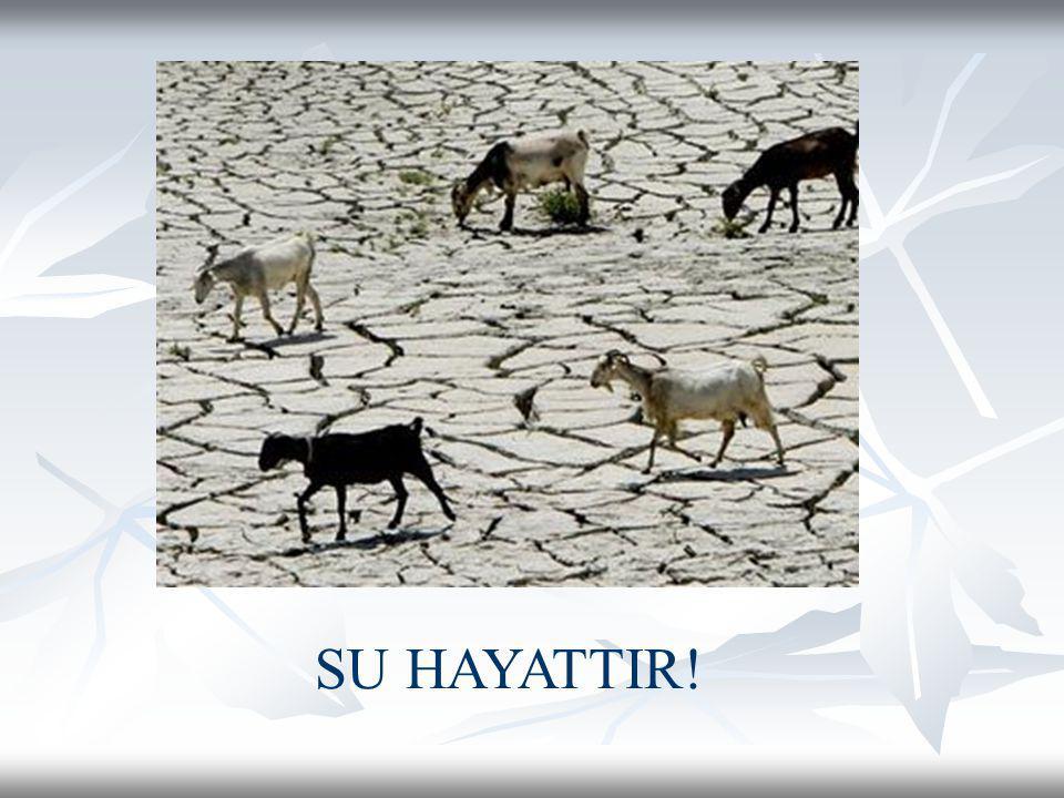 SU HAYATTIR!