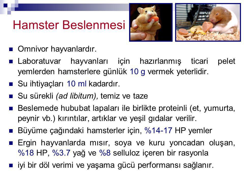 Omnivor hayvanlardır. Laboratuvar hayvanları için hazırlanmış ticari pelet yemlerden hamsterlere günlük 10 g vermek yeterlidir. Su ihtiyaçları 10 ml k