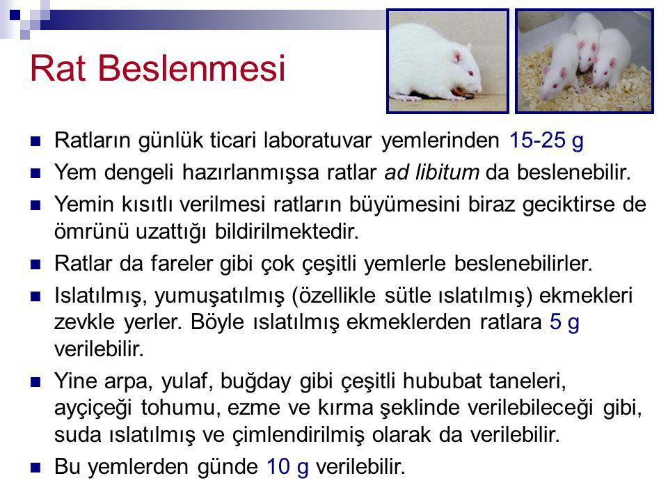 Rat Beslenmesi Ratların günlük ticari laboratuvar yemlerinden 15-25 g Yem dengeli hazırlanmışsa ratlar ad libitum da beslenebilir. Yemin kısıtlı veril