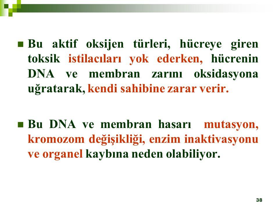 38 Bu aktif oksijen türleri, hücreye giren toksik istilacıları yok ederken, hücrenin DNA ve membran zarını oksidasyona uğratarak, kendi sahibine zarar