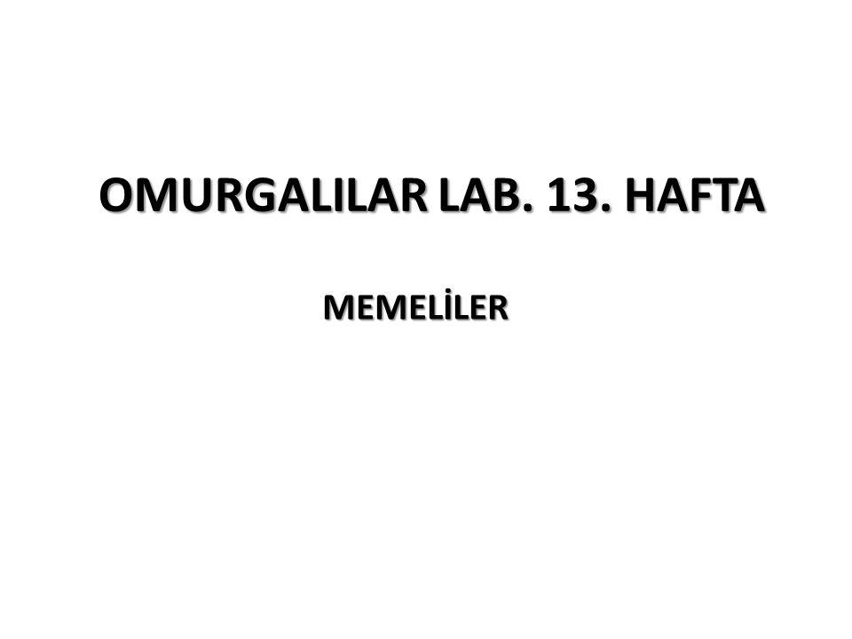 OMURGALILAR LAB. 13. HAFTA MEMELİLER