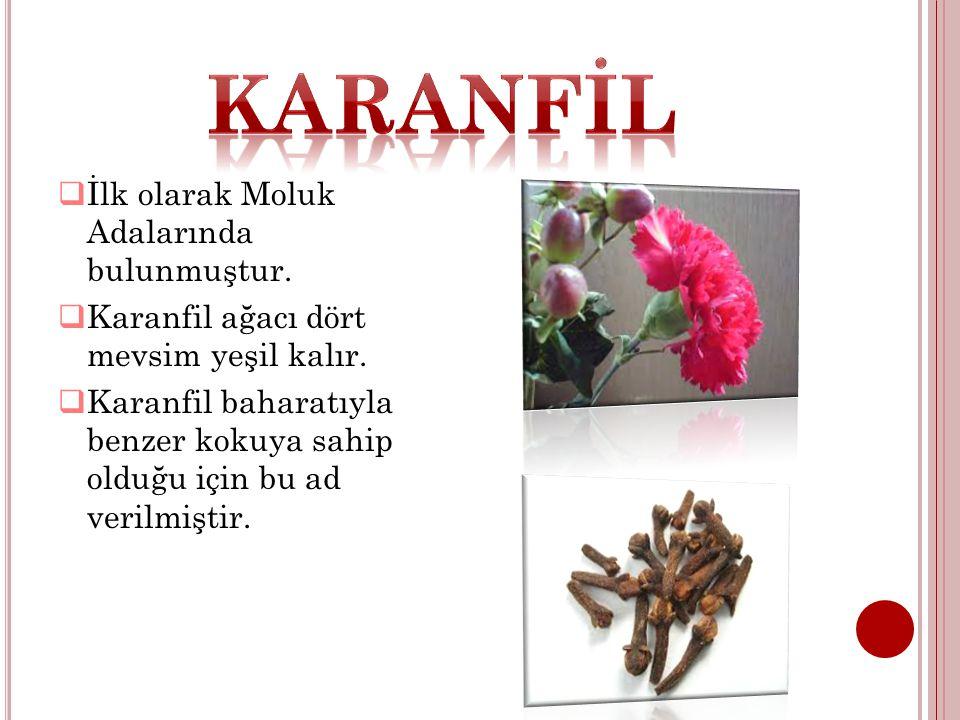  İlk olarak Moluk Adalarında bulunmuştur.  Karanfil ağacı dört mevsim yeşil kalır.  Karanfil baharatıyla benzer kokuya sahip olduğu için bu ad veri