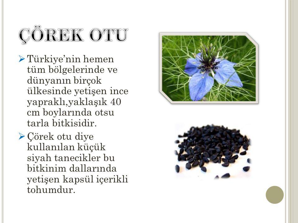  Türkiye'nin hemen tüm bölgelerinde ve dünyanın birçok ülkesinde yetişen ince yapraklı,yaklaşık 40 cm boylarında otsu tarla bitkisidir.  Çörek otu d
