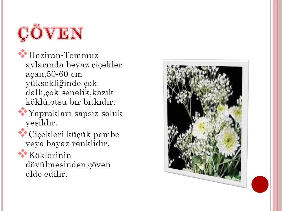  Haziran-Temmuz aylarında beyaz çiçekler açan,50-60 cm yüksekliğinde çok dallı,çok senelik,kazık köklü,otsu bir bitkidir.