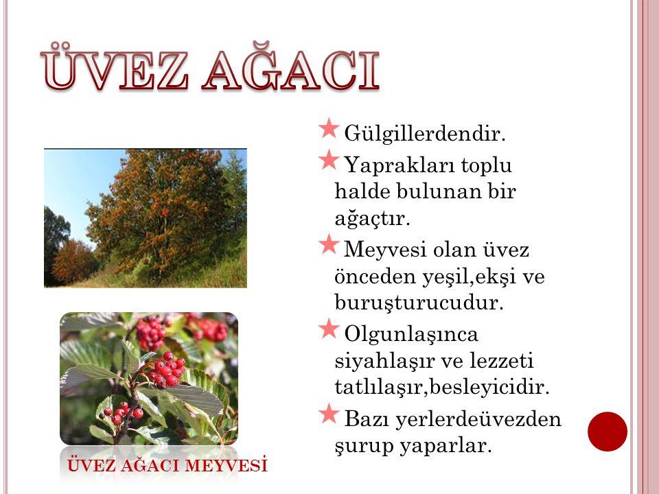  Gülgillerdendir.  Yaprakları toplu halde bulunan bir ağaçtır.  Meyvesi olan üvez önceden yeşil,ekşi ve buruşturucudur.  Olgunlaşınca siyahlaşır v