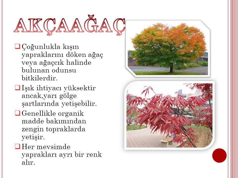  Çoğunlukla kışın yapraklarını döken ağaç veya ağaçcık halinde bulunan odunsu bitkilerdir.