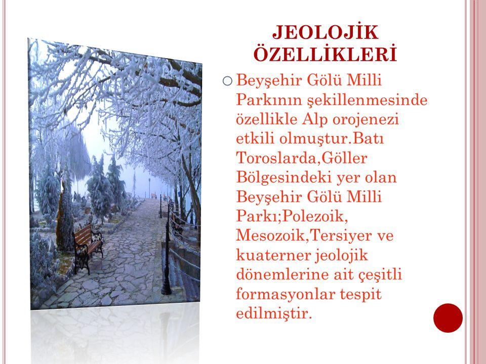 JEOLOJİK ÖZELLİKLERİ o Beyşehir Gölü Milli Parkının şekillenmesinde özellikle Alp orojenezi etkili olmuştur.Batı Toroslarda,Göller Bölgesindeki yer olan Beyşehir Gölü Milli Parkı;Polezoik, Mesozoik,Tersiyer ve kuaterner jeolojik dönemlerine ait çeşitli formasyonlar tespit edilmiştir.