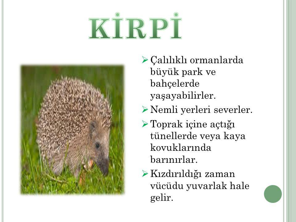  Çalılıklı ormanlarda büyük park ve bahçelerde yaşayabilirler.