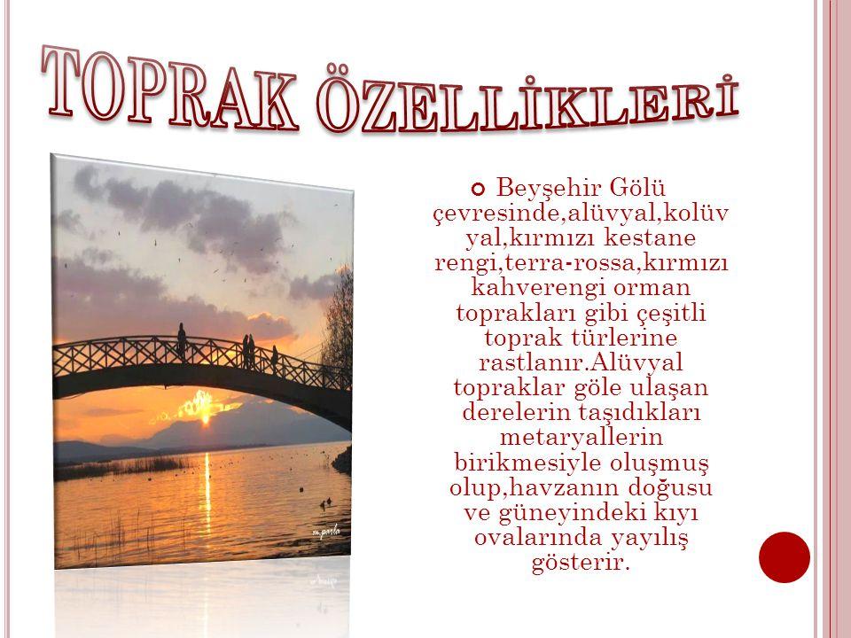 Beyşehir Gölü çevresinde,alüvyal,kolüv yal,kırmızı kestane rengi,terra-rossa,kırmızı kahverengi orman toprakları gibi çeşitli toprak türlerine rastlan