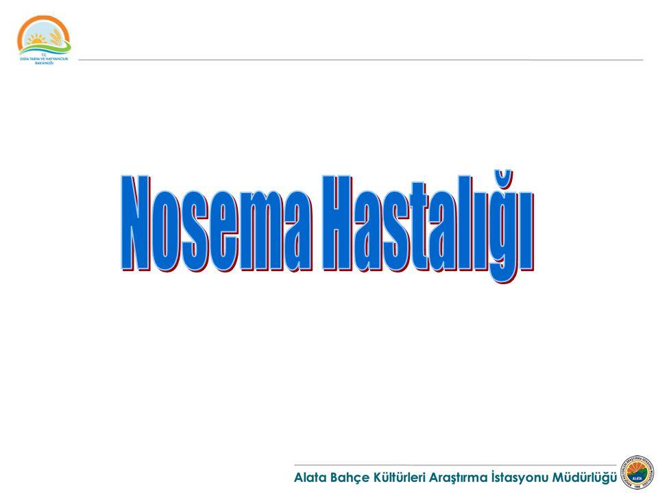 Nosema Hastalığı Etmeni Nosema apis adı verilen bir protozoadır.