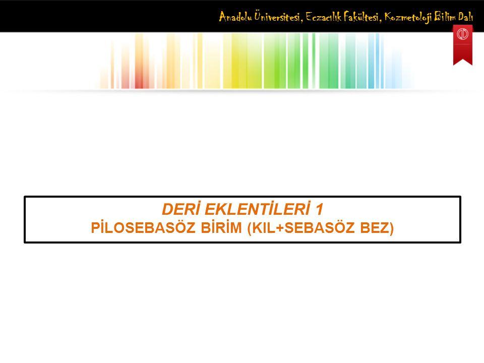 Anadolu Üniversitesi, Eczacılık Fakültesi, Kozmetoloji Bilim Dalı DERİ EKLENTİLERİ 1 PİLOSEBASÖZ BİRİM (KIL+SEBASÖZ BEZ)