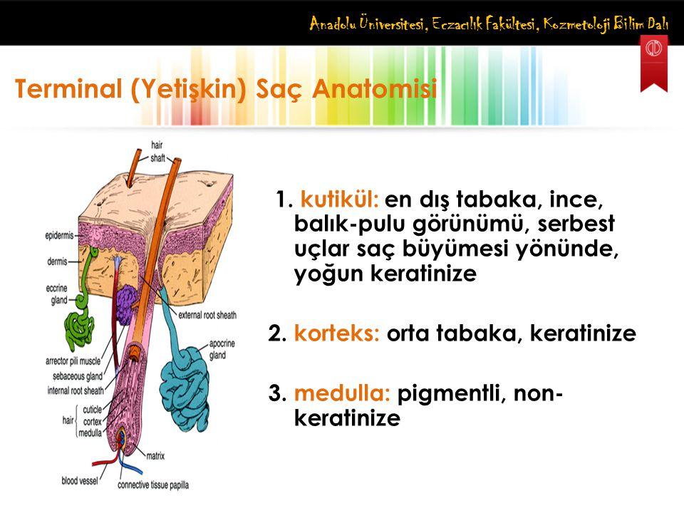 Anadolu Üniversitesi, Eczacılık Fakültesi, Kozmetoloji Bilim Dalı 1. kutikül: en dış tabaka, ince, balık-pulu görünümü, serbest uçlar saç büyümesi yön