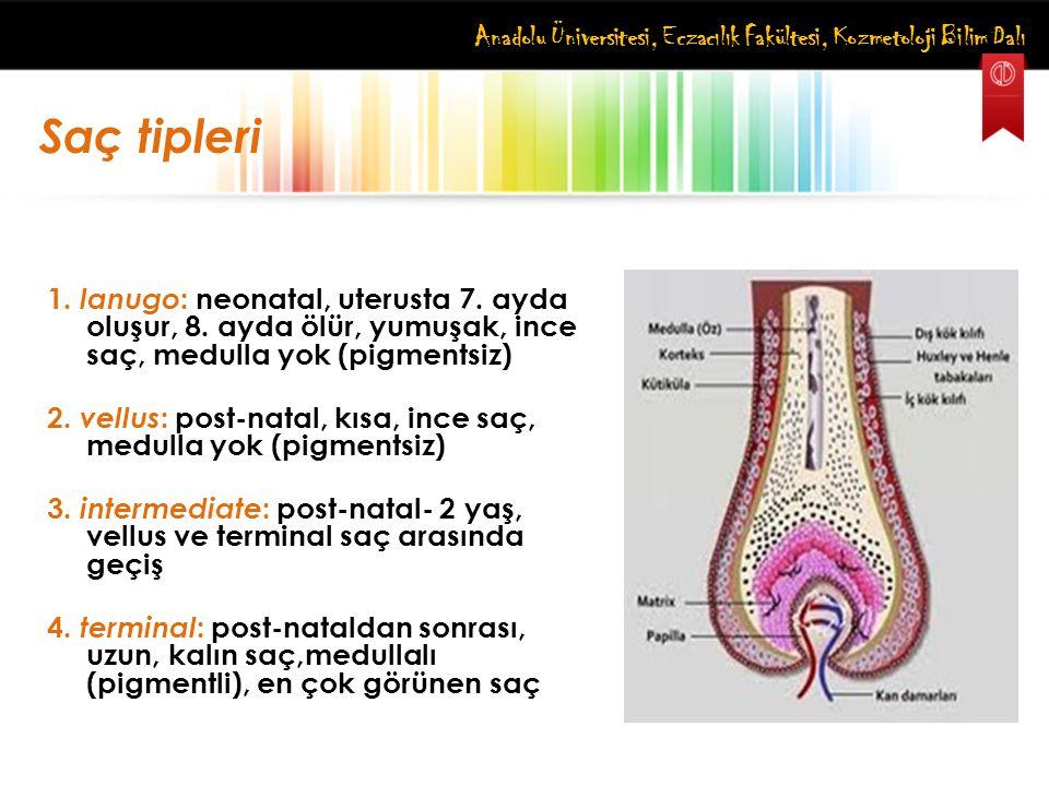 Anadolu Üniversitesi, Eczacılık Fakültesi, Kozmetoloji Bilim Dalı Saç tipleri 1. lanugo : neonatal, uterusta 7. ayda oluşur, 8. ayda ölür, yumuşak, in