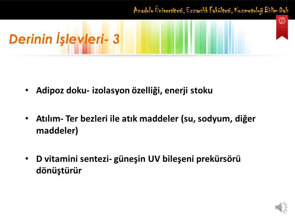 Anadolu Üniversitesi, Eczacılık Fakültesi, Kozmetoloji Bilim Dalı Derinin İşlevleri- 3 Adipoz doku- izolasyon özelliği, enerji stoku Atılım- Ter bezle