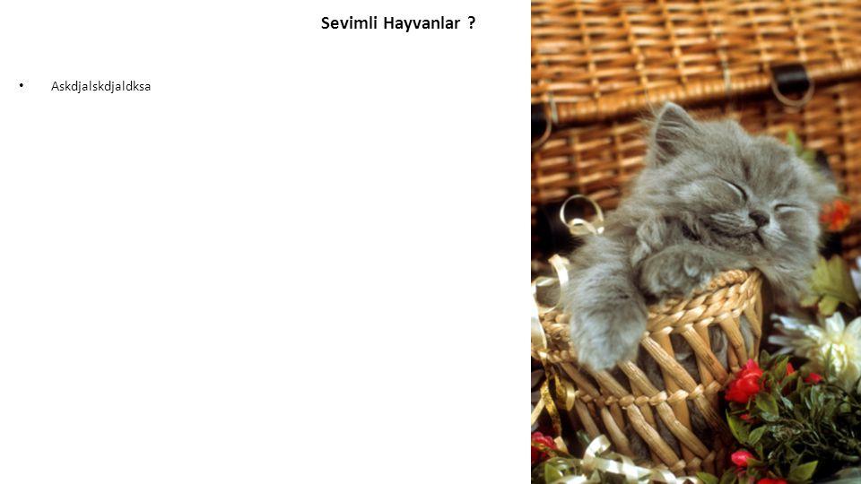 Askdjalskdjaldksa Sevimli Hayvanlar ?