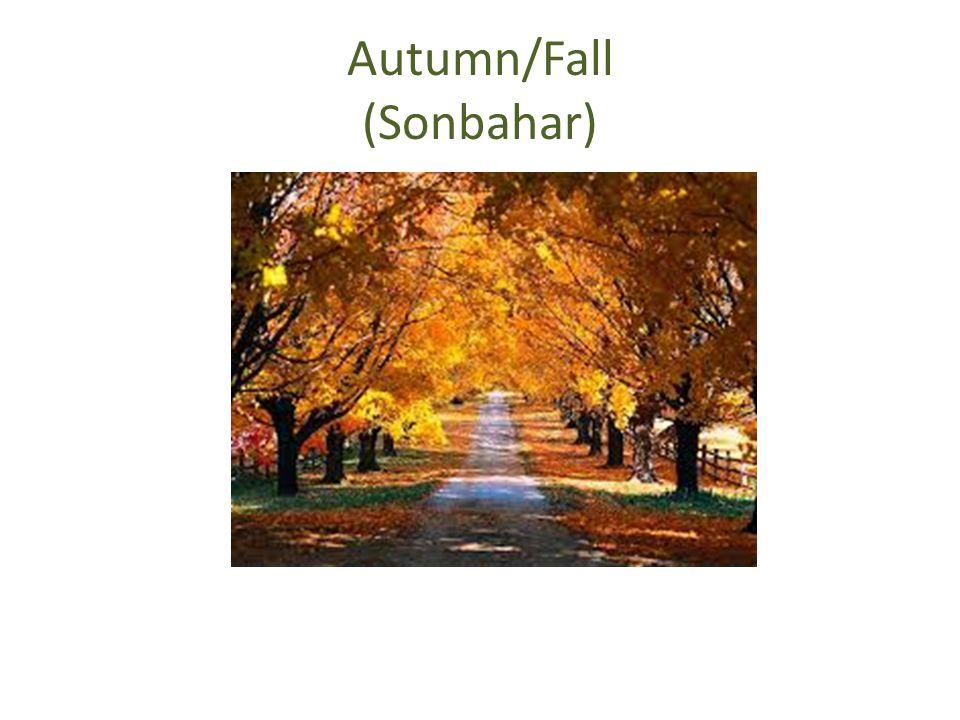 Autumn/Fall (Sonbahar)
