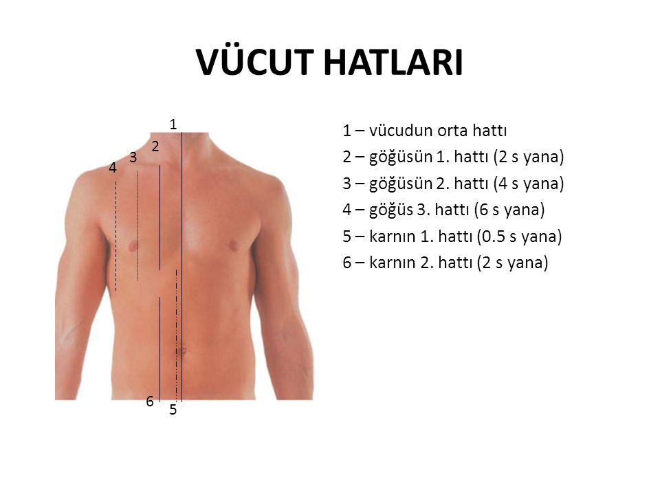 VÜCUT HATLARI 1 – vücudun orta hattı 2 – göğüsün 1. hattı (2 s yana) 3 – göğüsün 2. hattı (4 s yana) 4 – göğüs 3. hattı (6 s yana) 5 – karnın 1. hattı