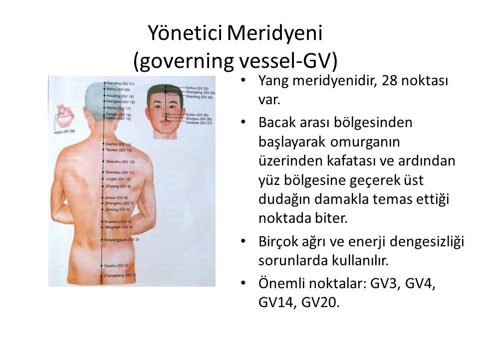 Yönetici Meridyeni (governing vessel-GV) Yang meridyenidir, 28 noktası var. Bacak arası bölgesinden başlayarak omurganın üzerinden kafatası ve ardında