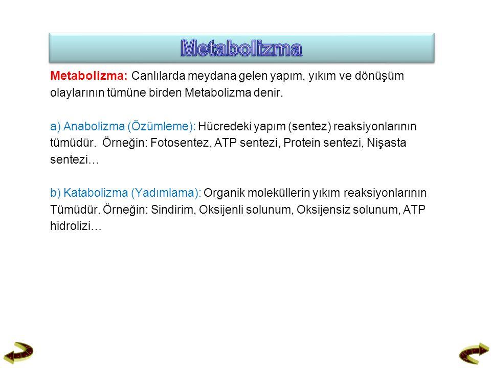 Metabolizma: Canlılarda meydana gelen yapım, yıkım ve dönüşüm olaylarının tümüne birden Metabolizma denir. a) Anabolizma (Özümleme): Hücredeki yapım (