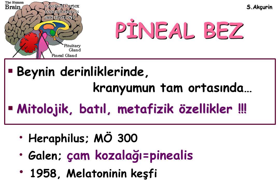 PİNEAL BEZ Heraphilus; MÖ 300 Galen; çam kozalağı=pinealis 1958, Melatoninin keşfi  Beynin derinliklerinde, kranyumun tam ortasında…  Mitolojik, bat