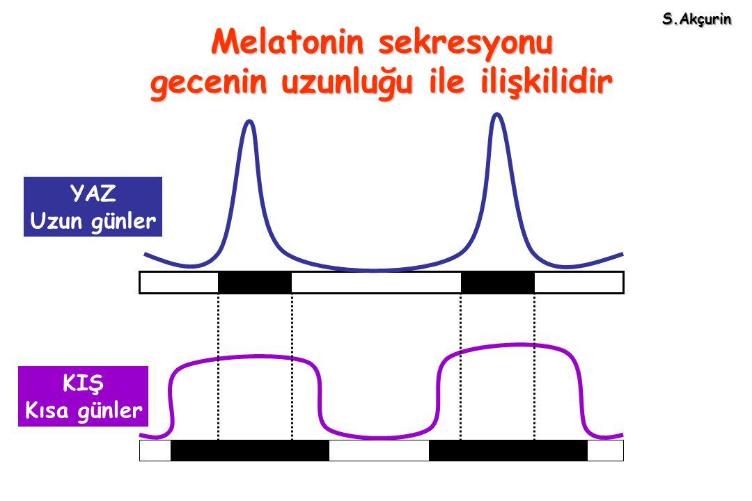 Melatonin sekresyonu gecenin uzunluğu ile ilişkilidir YAZ Uzun günler KIŞ Kısa günler S.Akçurin