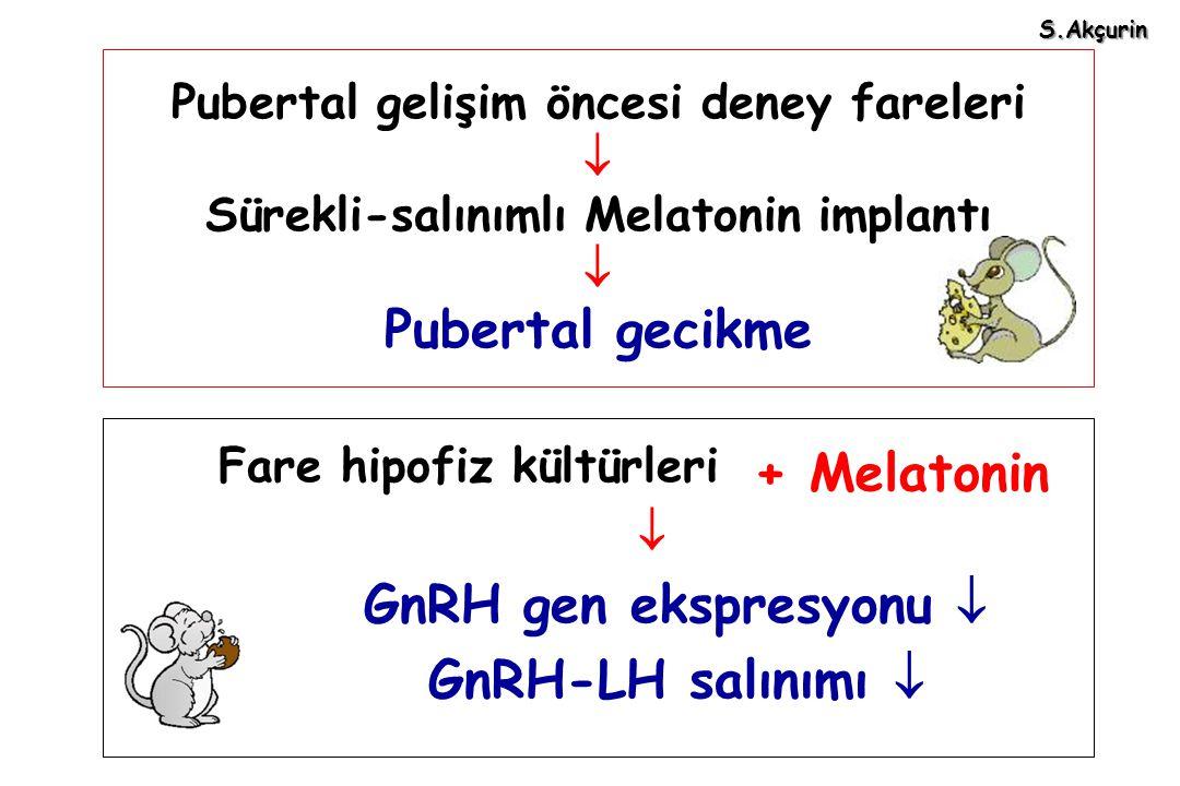 Pubertal gelişim öncesi deney fareleri  Sürekli-salınımlı Melatonin implantı  Pubertal gecikme Fare hipofiz kültürleri  GnRH gen ekspresyonu  GnRH