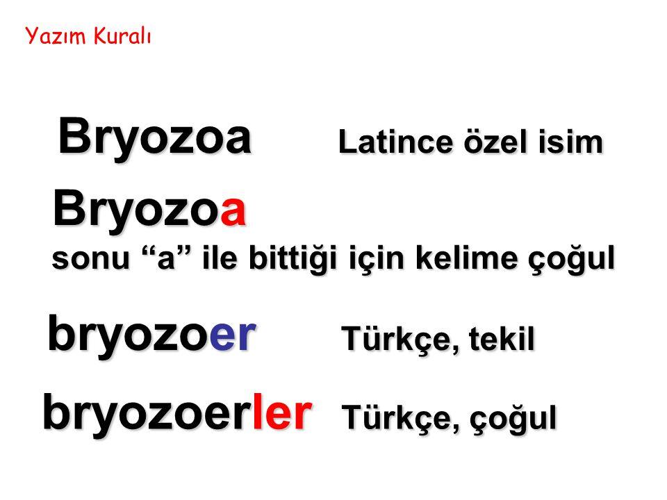 Bryozoa sonu a ile bittiği için kelime çoğul Bryozoa Latince özel isim bryozoer Türkçe, tekil bryozoerler Türkçe, çoğul Yazım Kuralı